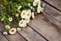 Fleurs blanches d'aster Photographie stock