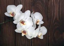 Fleurs blanches d'orchidée sur le bois Photos libres de droits