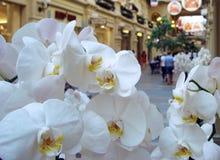 Fleurs blanches d'orchidée sur le fond d'un grand centre commercial photos stock