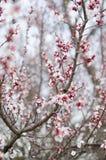 Fleurs blanches d'une floraison photos stock