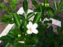 Fleurs blanches dans le jardin photo libre de droits