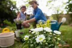 Fleurs blanches dans le pot avec la mère et la fille à l'arrière-plan photo stock