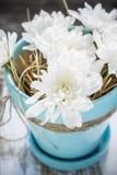 Fleurs blanches dans le pot de couleur de turquoise Photos libres de droits