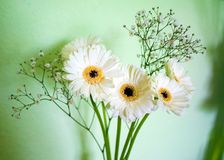 Fleurs blanches dans le vase Photo libre de droits