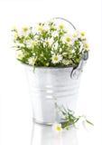 Fleurs blanches dans un bac photos libres de droits