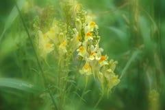 Fleurs blanches dans un domaine vert vibrant images stock