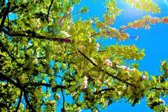 Fleurs blanches dans un jour du soleil images libres de droits