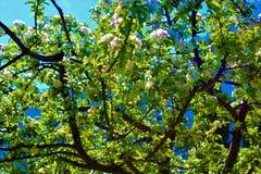 Fleurs blanches dans un jour du soleil images stock