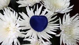 Fleurs blanches de chrysanthèmes et boîte-cadeau bleu Photos libres de droits