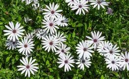 Fleurs blanches de couleur Images stock
