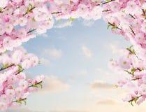 Fleurs blanches de floraison d'arbre Photographie stock libre de droits