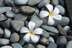 Fleurs blanches de frangipani Images stock