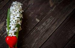 Fleurs blanches de jacinthe et coeur rouge sur le fond en bois Images stock