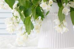 Fleurs blanches de jasmin dans le vase blanc Images stock