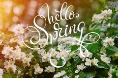 Fleurs blanches de jasmin sur un arbre avec les baisses de rosée et le ressort des textes bonjour Lettrage de calligraphie Images libres de droits