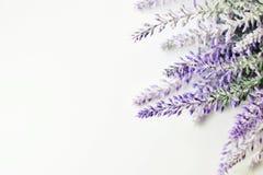 Fleurs blanches de lavande vues étroitement vers le haut Images libres de droits