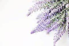 Fleurs blanches de lavande vues étroitement vers le haut Photo libre de droits