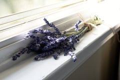 Fleurs blanches de lavande vues étroitement vers le haut Image libre de droits