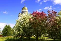 Fleurs blanches de pommier Image libre de droits