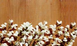 Fleurs blanches de ressort de glycine sur le bois Images stock