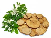 Fleurs blanches de sorbe et feuilles fraîches, support de genévrier sous un chaud d'isolement image stock