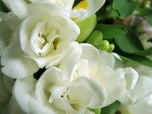 Fleurs blanches de source Photos stock
