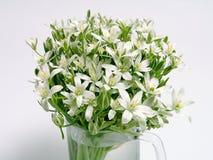 Fleurs blanches de source Photo libre de droits