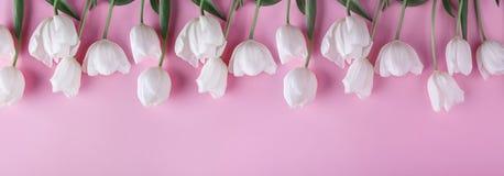 Fleurs blanches de tulipes au-dessus de fond rose-clair Carte de voeux ou invitation de mariage photographie stock