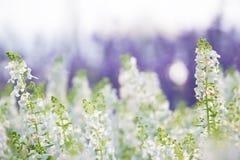 Fleurs blanches DOF peu profond Photographie stock libre de droits