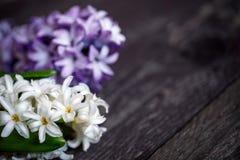 Fleurs blanches et bleues de jacinthe et coeur rouge sur le backgrou en bois Images stock