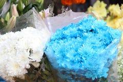 Fleurs blanches et bleues fraîches de chrysanthème Photographie stock libre de droits