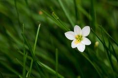 Fleurs blanches et pré Photo stock