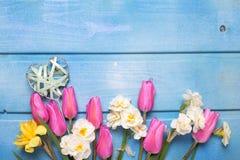 Fleurs blanches et roses de ressort et coeur décoratif sur le bois bleu Photographie stock