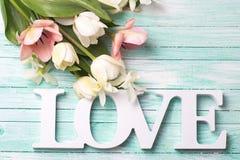 Fleurs blanches et roses fraîches de tulipes et amour de mot Photos stock
