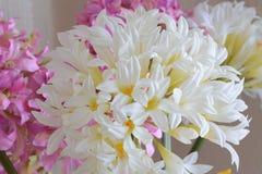 Fleurs blanches et texture rose de tissu photo stock