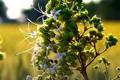 Fleurs blanches et vertes Image libre de droits