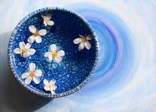 Fleurs dans une cuvette bleue Photographie stock libre de droits