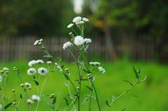 Fleurs blanches gaies images libres de droits