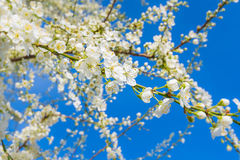 Fleurs blanches merveilleuses au soleil Photos stock