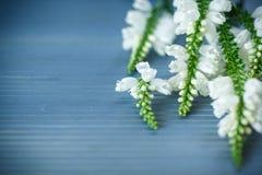 Fleurs blanches mignonnes Photographie stock