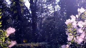 Fleurs blanches pelucheuses de la lueur d'usine au soleil sur le fond banque de vidéos
