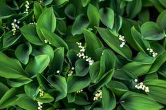 Fleurs blanches rétros Photographie stock libre de droits