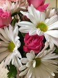 Fleurs blanches roses Images libres de droits