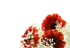 Fleurs blanches rouges photographie stock