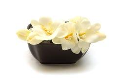 Fleurs blanches sensibles Photographie stock libre de droits