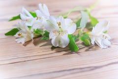 Fleurs blanches sensibles au soleil chaud Photos libres de droits