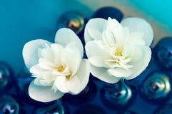 Fleurs blanches sensibles de jasmin sur l'eau Photographie stock libre de droits