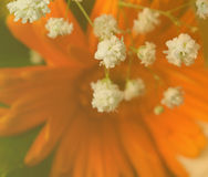 Fleurs blanches sur l'orange Photo stock