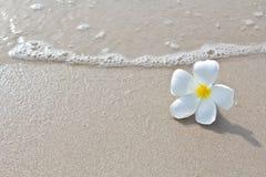 Fleurs blanches sur la plage Photographie stock libre de droits