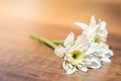 Fleurs blanches sur la terre Images libres de droits